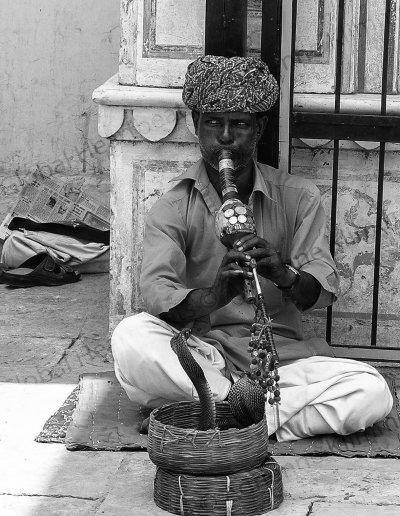 India | Welcome by a snake charmer